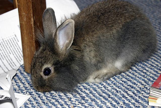 mr. rabbit strikes back (oktober 2006)