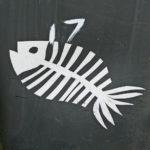 fishy 17