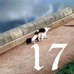 Adventstürchen #17: auf den hund gekommen