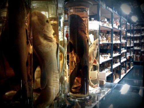 wissenschaft im glas