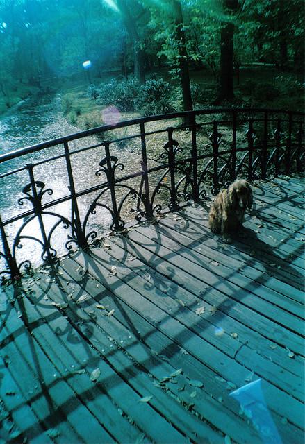 Hund in Wroclaw (Okt 2007)