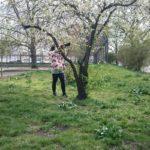 Im Frühling fotografieren sie wieder die Blüten