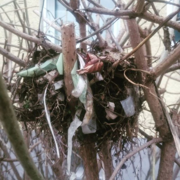 #upcycling #birdnest