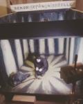 aus: Das Cabinet des Dr. Caligari, 1920